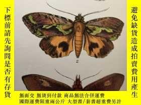 二手書博民逛書店1897年罕見A HAND-BOOK TO THE ORDER LEPIDOPTERA 含30副彩色插圖 BUTT