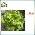 【綠藝家】A19.大陸妹種子2500顆(...