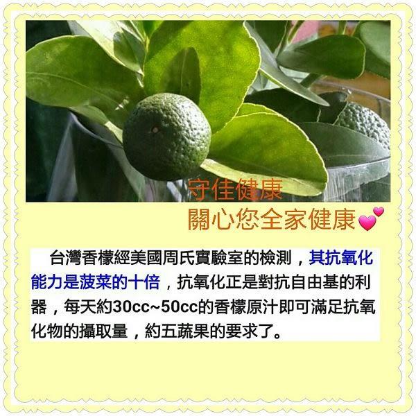 【台灣香檬】100%台灣香檬原汁(300ml/瓶)x4瓶 含運價1000元
