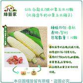 【綠藝家】G59.白龍王2號水果玉米10顆(北海道牛奶水果玉米種子)