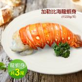 【屏聚美食】蔚藍海-加勒比海龍蝦身3尾(220g±10%/隻)免運組