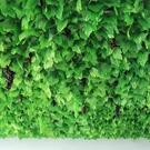 仿真葡萄葉樹葉子綠葉
