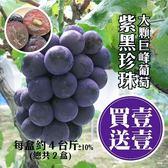 買1送1【果之蔬-全省免運】產地直配巨峰紫黑珍珠葡萄 共2盒【淨重4台斤±10%/盒 約4串】