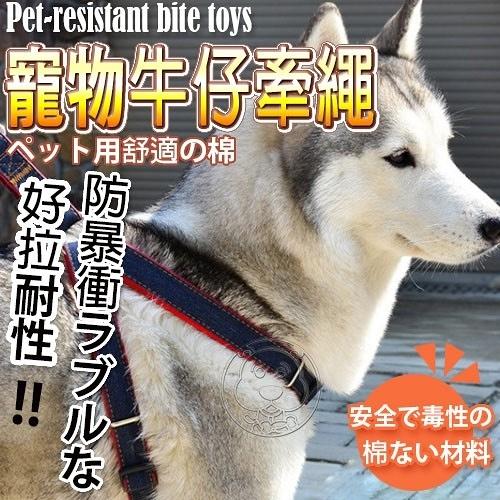 【培菓幸福寵物專營店】DYY》100%手工中小型犬走防暴衝牛仔布寵加厚物胸背帶組M號