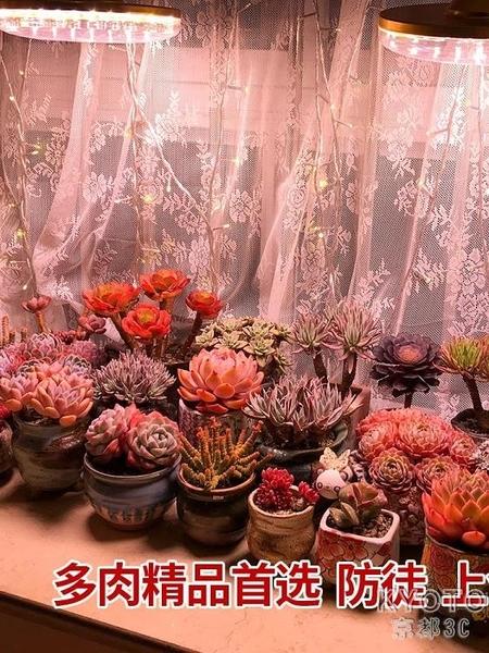 多肉補光燈上色全光譜led家用室內花卉防徒植物仿太陽 【快速出貨】