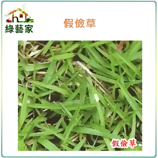 【綠藝家】超級假儉草種子( 500公克裝 )(超級喬治亞.純度99%)