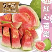 【家購網嚴選】屏東高樹特產 精選紅心芭樂5斤裝/盒 (9~13顆)