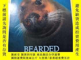 二手書博民逛書店罕見NATIONAL GEOGRAPHIC BEARDED SEALS 1997 3(美國國家地理 髭海豹)中國黃