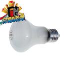 elinchrom [EL23006] 對焦燈泡 90V /100W 華曜公司貨 棚燈用燈泡