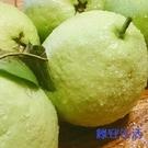 【南紡購物中心】【綠安生活】燕巢牛奶珍珠...