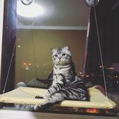夏天貓窩貓吊床掛窩可拆掛床秋千吸盤式 貓咪吊床窩窗臺貓咪用品WY 鉅惠兩天【限時八五折】