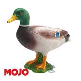 【Mojo Fun 動物星球頻道 獨家授權】綠頭鴨 387127