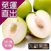 沁甜果園SSN. 蜜棗(5台斤/箱,共2箱)【免運直出】