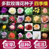 花卉種子 玫瑰花種子200粒花種子春播四季易種玫瑰花籽開花不斷鮮花種子-凡屋