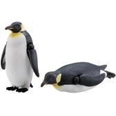 正版 TAKARA TOMY 多美小動物 S11 國王企鵝 公仔 可動公仔 COCOS FG680