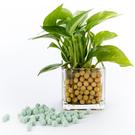 陶碳球 250g 綠色 負離子效果 無土栽培/水培/小盆栽/水族