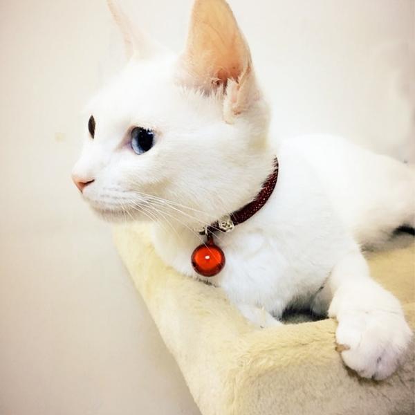 寵物狗狗 銅鈴鐺項鍊貓鈴鐺泰迪貓咪貓牌
