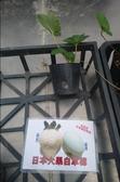 花花世界_水果果苗--日本大果白草莓--籽紅.大果/3吋盆/10-15公分/Ts