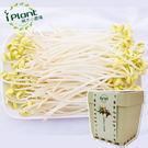 iPlant積木農場-豆芽菜...