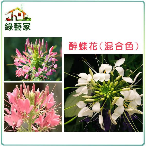 【綠藝家】大包裝H16.醉蝶花(混合色,高100cm以上)種子5克(約1500顆)