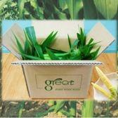 產銷履歷鮮綠水果玉米筍5台斤(含葉)-春天輕食首選