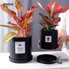 北歐陶瓷花盆簡約圓柱帶托盤室內沙漠植物多...
