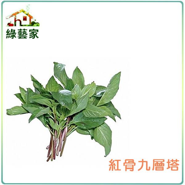 【綠藝家】大包裝F02.九層塔 (紅骨羅勒)種子15克