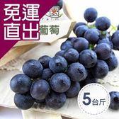 沁甜果園SSN. 預購-苗栗巨峰葡萄(5台斤/箱)【免運直出】