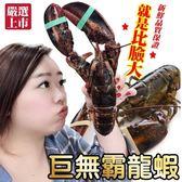 525元起【海肉管家-全省免運】加拿大波士頓螯龍蝦x1隻(每隻400g-500g)
