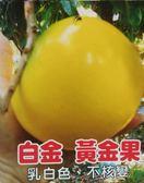 花花世界_水果苗--白金黃金果--最新品種/4吋盆/高30公分/Ts