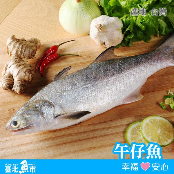 【台北魚市】午仔魚 250g±5%