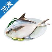 冷凍白鯧450g±10%-尾【愛買冷凍】