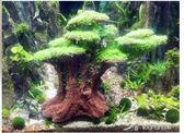 魚缸擺件 魚缸造景石假山生態水草缸造景石可種草的石頭水族箱裝飾盆景擺件 樂芙美鞋