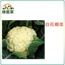 【綠藝家】B03.白花椰菜種子50顆...