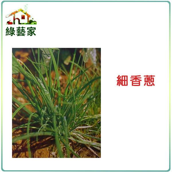 【綠藝家】大包裝D01.細香蔥種子18克