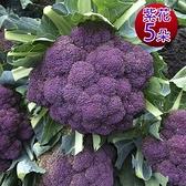 預購1/10出貨【鮮採家】雲林產地直送軟嫩帶葉紫花椰菜5朵(單顆約525±10%)