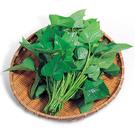 地瓜菜(地瓜葉)約250g*2包★安全蔬...