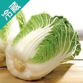 【進口】山東大白菜1粒(800g± 10%/粒)【愛買冷藏】