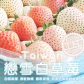 【屏聚美食】台灣獨特-戀雪粉嫩草莓1箱(500G/箱)免運