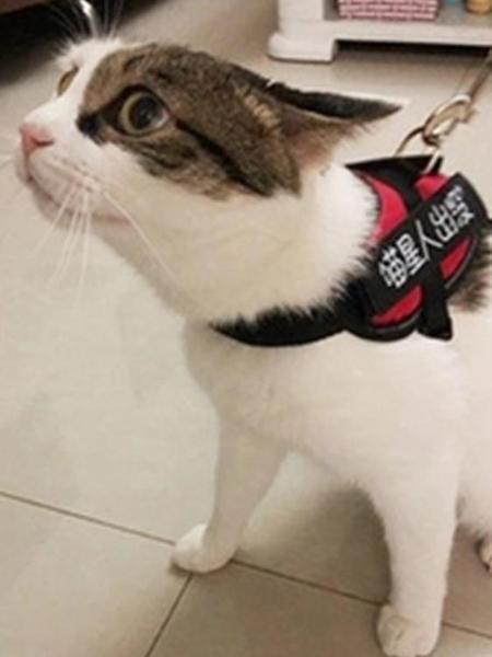 貓咪牽引繩溜貓繩貓咪專用背心式防掙脫貓錬子遛貓繩項圈貓咪用品  【韓語空間】