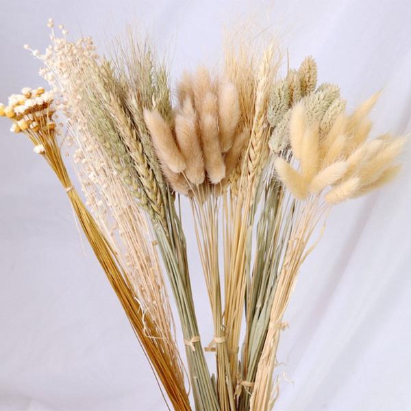 【BlueCat】天然乾燥 苦麻 乾燥花 拍攝道具 拍照背景 花材