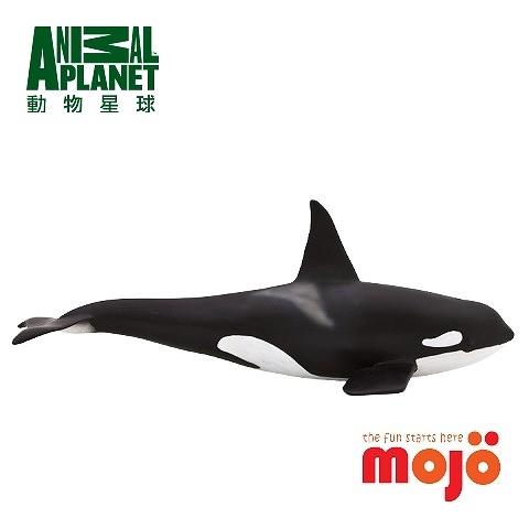 《MOJO FUN動物模型》動物星球頻道獨家授權 - 虎鯨