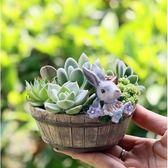 ⓒ花朵兔兔木桶多肉花盆 兔子多肉盆栽【D003001】