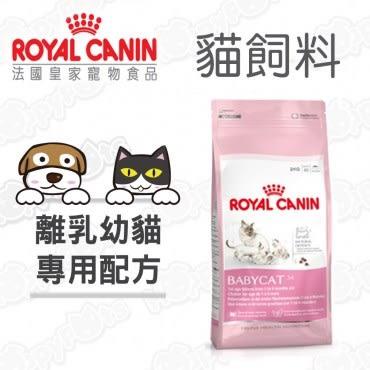 ROYAL CANIN 法國皇家 離乳貓 BC34 貓飼料 4kg X 1包