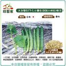 【綠藝家】大包裝G17-1.小黃瓜(30...