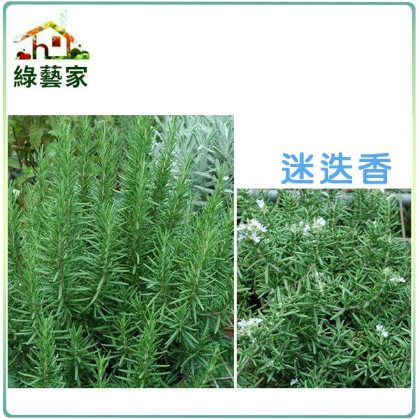 【綠藝家】大包裝K08.迷迭香種子0.6克(約350顆)