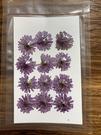重瓣小紫菊壓花,一份12朵