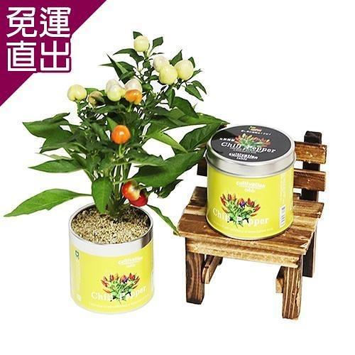 迎光 Cultivation Table栽培罐五彩辣椒【免運直出】
