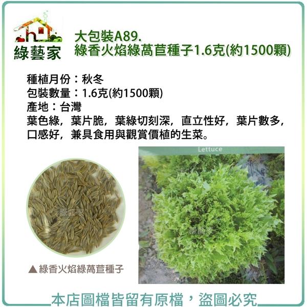 【綠藝家】大包裝A89.綠香火焰綠萵苣種子1.6克(約1500顆)