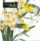 新貨到!金翅雀Caskata Studio特別版-德國 IHR 餐巾紙(33x33cm)